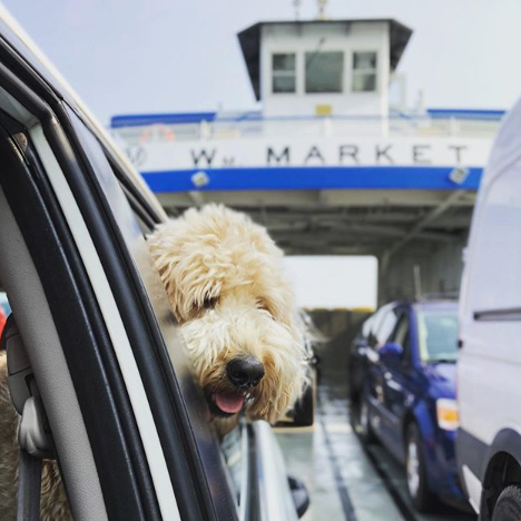 Dog on board Miller Ferry