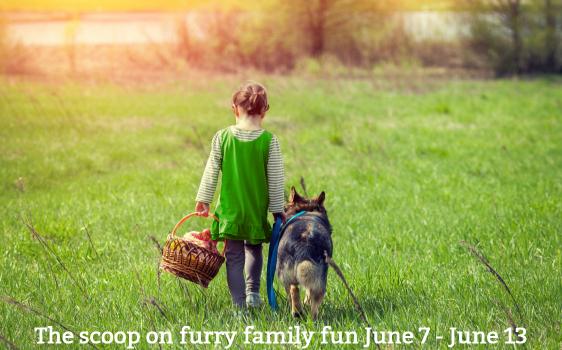 Furry Family Fun